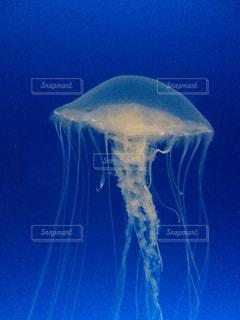 クラゲの写真・画像素材[1316295]