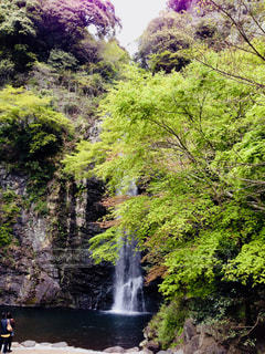 箕面の滝の写真・画像素材[1322275]