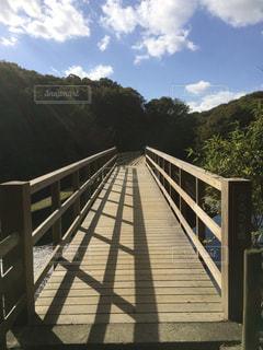 室池のかるがも橋の写真・画像素材[1327027]