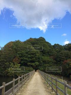 府民の森の写真・画像素材[1327029]