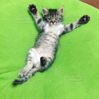 マシュマロクッションを満喫する子猫の写真・画像素材[1297718]