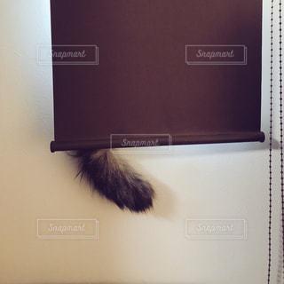 窓辺で隠れんぼする猫の写真・画像素材[1299883]