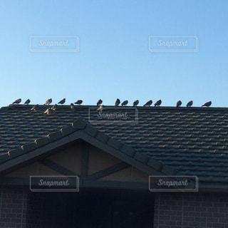 屋根の上の鳩の群れの写真・画像素材[1302571]