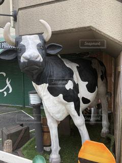 牛の写真・画像素材[1327697]