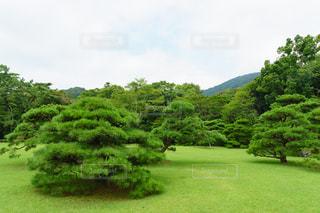 日本庭園の写真・画像素材[920740]