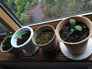 植物の写真・画像素材[1301301]
