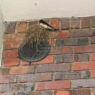 ツバメの巣の写真・画像素材[1297491]