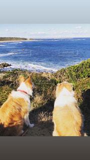 犬が水の外を見ているの写真・画像素材[2917301]