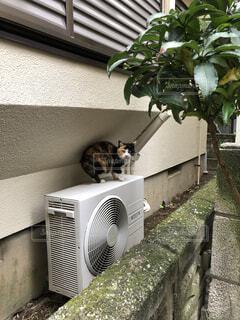 室外機の上の猫の写真・画像素材[3736785]
