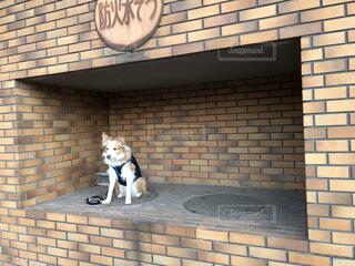 レンガの建物に犬の写真・画像素材[4052103]