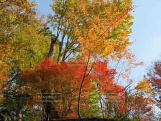 いろんな色に色づいた紅葉の写真・画像素材[2738515]