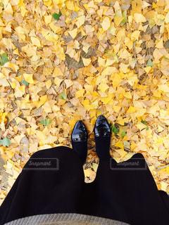 秋ですなーの写真・画像素材[1309343]