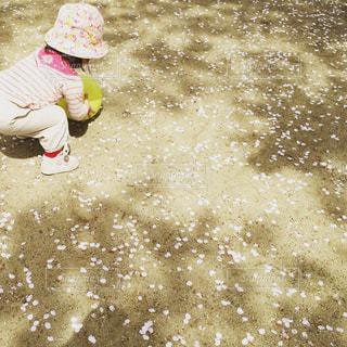 春の終わりとボール遊びの写真・画像素材[1297482]