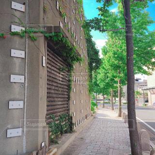 歩道の写真・画像素材[1353181]