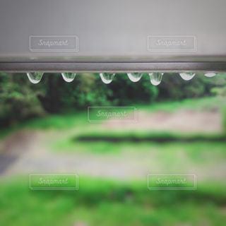 雫がきれいの写真・画像素材[2060420]