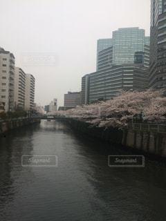桜並木の写真・画像素材[1303209]