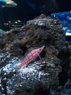 魚の写真・画像素材[1298261]