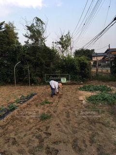 農作業中の写真・画像素材[1313871]