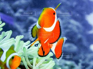 カラフルな魚の写真・画像素材[1298122]