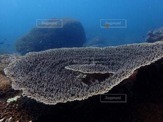 海と珊瑚の写真・画像素材[1308405]