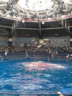 イルカのジャンプの写真・画像素材[1298837]