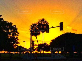 これでもかの夕焼けとパームツリーの写真・画像素材[1300131]