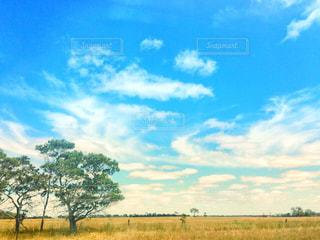 空と草原と木の写真・画像素材[1300142]