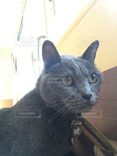 うちのネコ、外を見るの写真・画像素材[1302814]