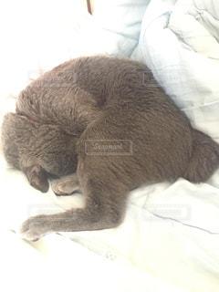 ベッドの上で横になっている猫の写真・画像素材[1307785]
