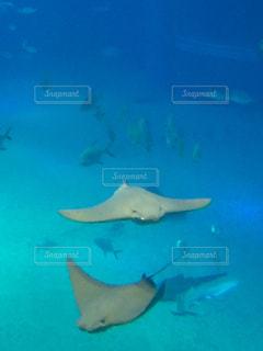 水面下を泳ぐ魚たちの写真・画像素材[1309401]