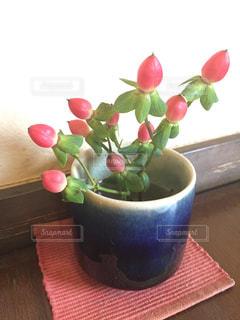 小さなお花の写真・画像素材[1317796]