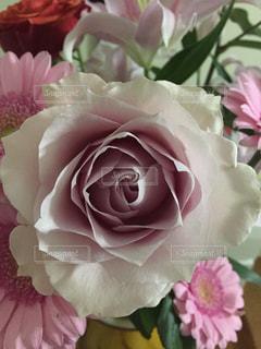 近くの花のアップの写真・画像素材[1319417]