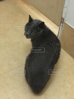 動物病院の待合室の写真・画像素材[1322670]