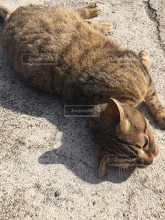 地面に横になっている猫の写真・画像素材[1351611]