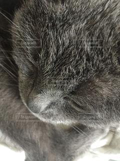 猫のアップの写真・画像素材[1356698]