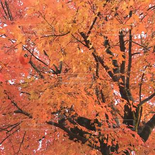 近くの木のアップの写真・画像素材[1362118]