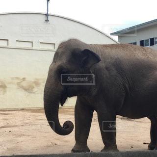建物の隣に立っている大きな象の写真・画像素材[1371860]