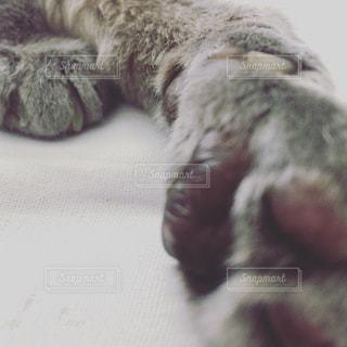 ベッドの上の猫の手の写真・画像素材[2089317]