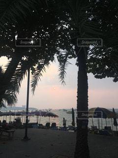 パタヤビーチの夕暮れの写真・画像素材[1299619]