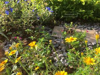 庭先の花の写真・画像素材[1304709]