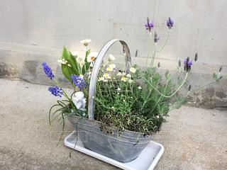 植物の紫色の花と花瓶の写真・画像素材[1300041]