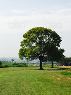 大きな木の写真・画像素材[1302963]