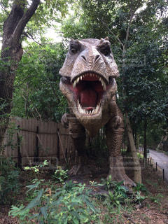 ティラノサウルスの写真・画像素材[1428911]