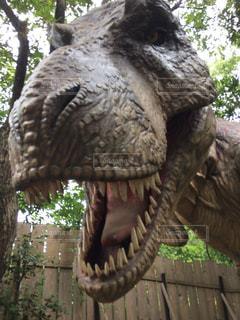 ティラノサウルスの写真・画像素材[1428938]