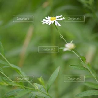 近くの花のアップの写真・画像素材[1300006]