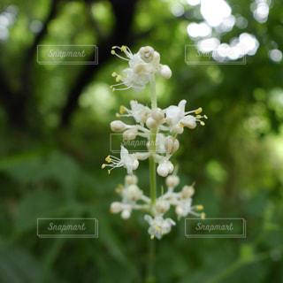 近くの花のアップの写真・画像素材[1300009]