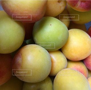 梅の写真・画像素材[1307669]