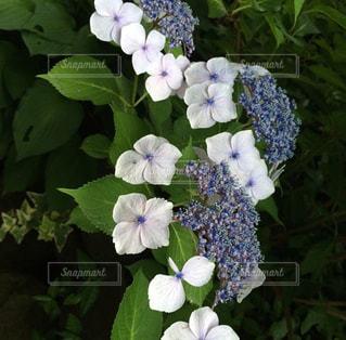 近くの花のアップの写真・画像素材[1307674]