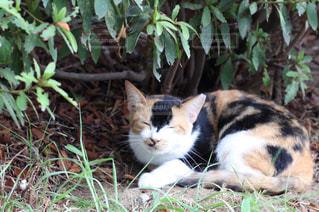地面に横になっている猫の写真・画像素材[1458119]