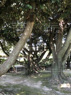公園の木の写真・画像素材[1302793]
